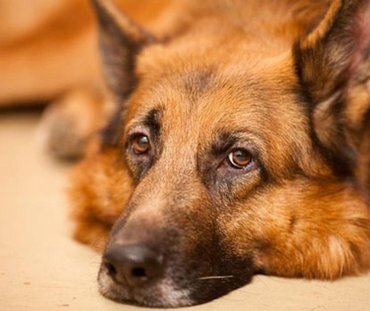 Минобороны разрешило призывникам служить вместе со своими собаками