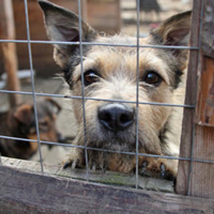 В Москве живодеры расправились со стаей собак