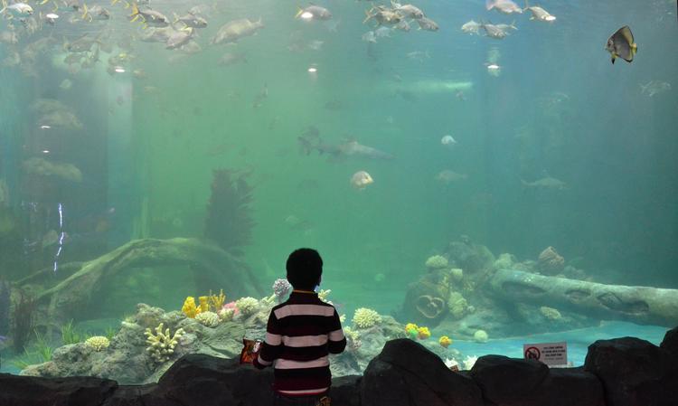 Китай: Новый аквариум в Макао затмил все другие в мире