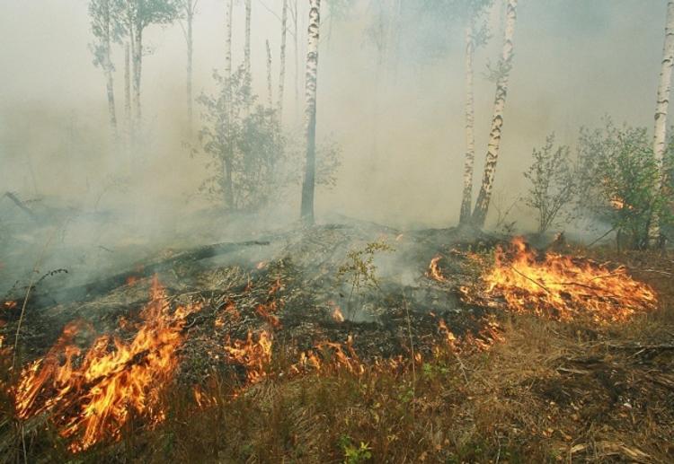 В Тверской области горит 50 гектаров торфяника