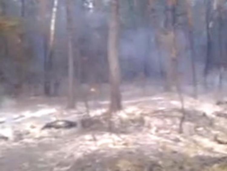 Смог от горящих тверских торфяников доберется до Подмосковья