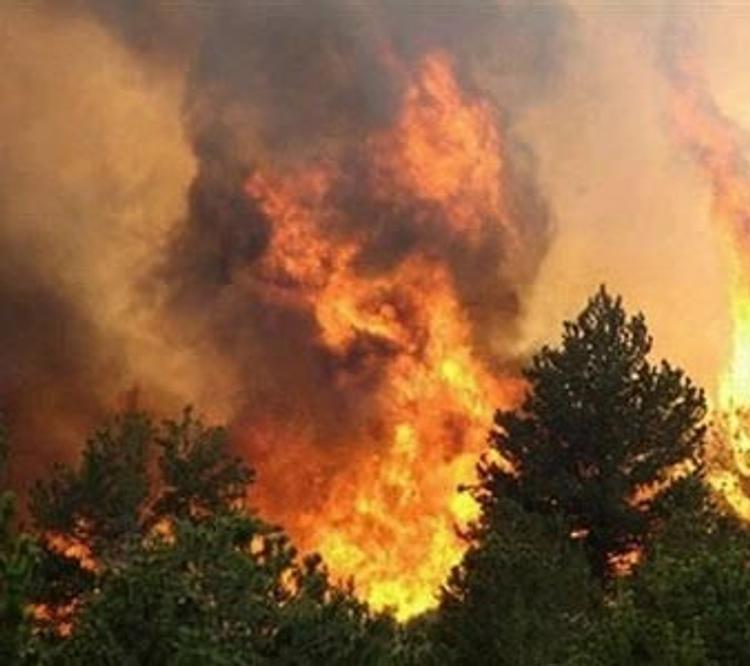 Под Ростовом-на-Дону горит сосновый бор