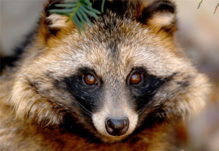 Тверскую область атаковали бешеные животные