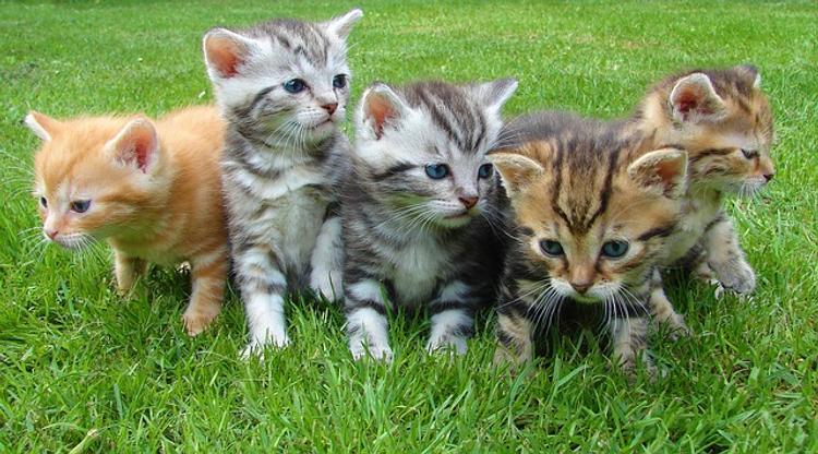 Австралийцы запретят домашним кошкам выходить на улицу