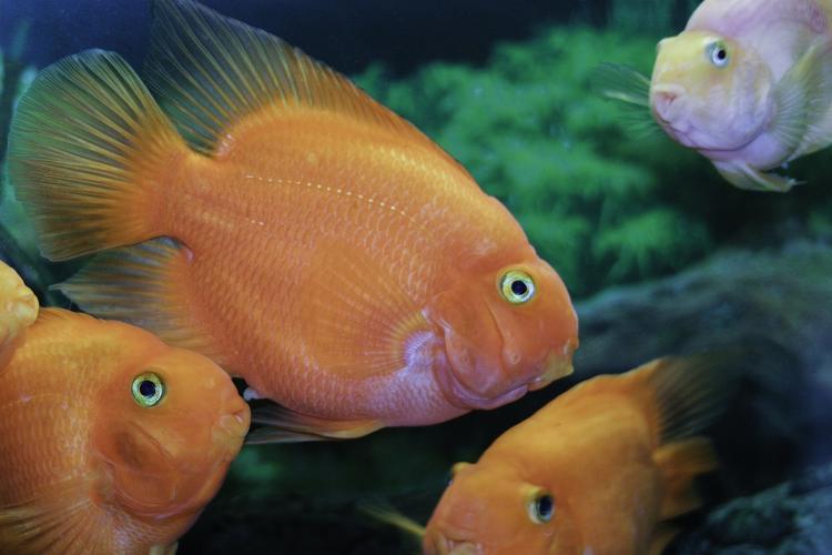 Ученые сделали удивительное открытие: рыбы являются эмоциональными созданиями