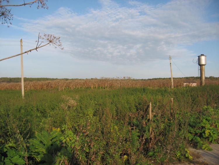 Частные земельные участки много лет не используются по прямому назначению