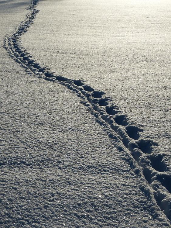 Турист, погибший на перевале Дятлова, знал, что умрёт