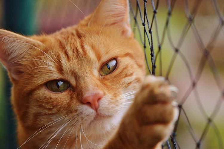 Британские учёные: собаководы счастливее и богаче владельцев кошек