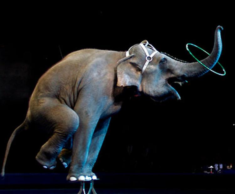 Должность худрука в Цирке на Фонтанке упраздняется