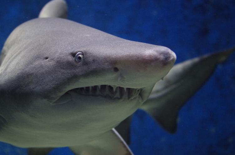 Акула убила женщину на западном побережье Австралии
