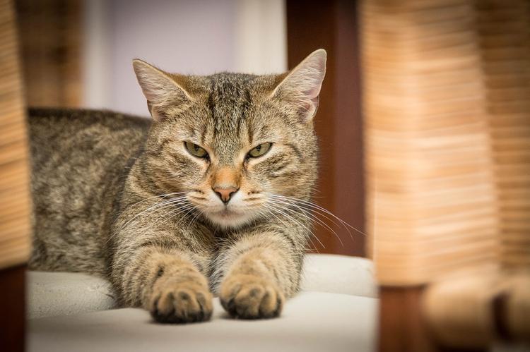 Светлана Бондарчук показала свою новую любимую кошку