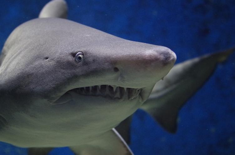 В сети появилось шокирующее видео с дайверами и акулой в Египте