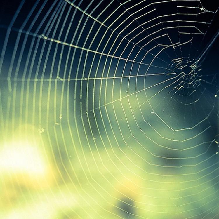 Огромный паук, поймавший мышь, напугал интернет-пользователей (ВИДЕО)
