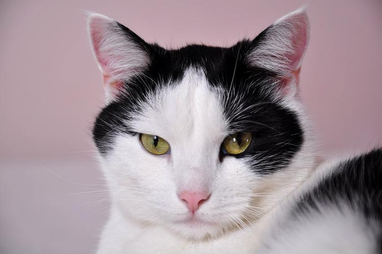Американку раскритиковали в Интернете за ее жалобу на кота в магазине (ФОТО)