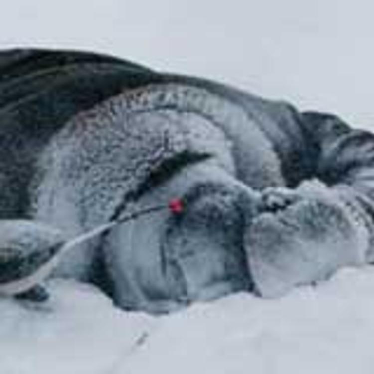 Пьяный житель Аши после 10-дневного запоя замерз насмерть на улице