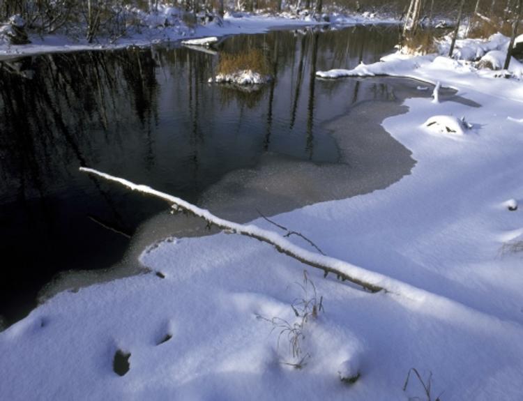 В Саратове мужчина с детьми провалился под лед на снегоходе, все погибли