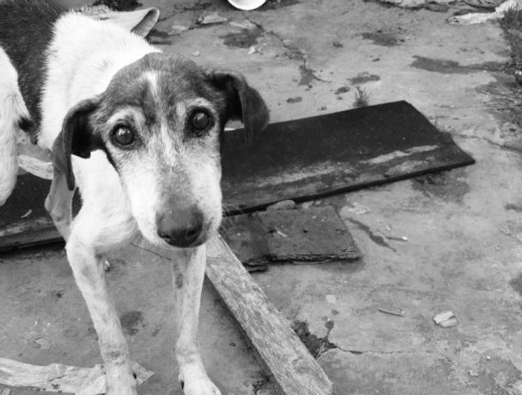 Бездомные собаки в Твери спасли утопающего