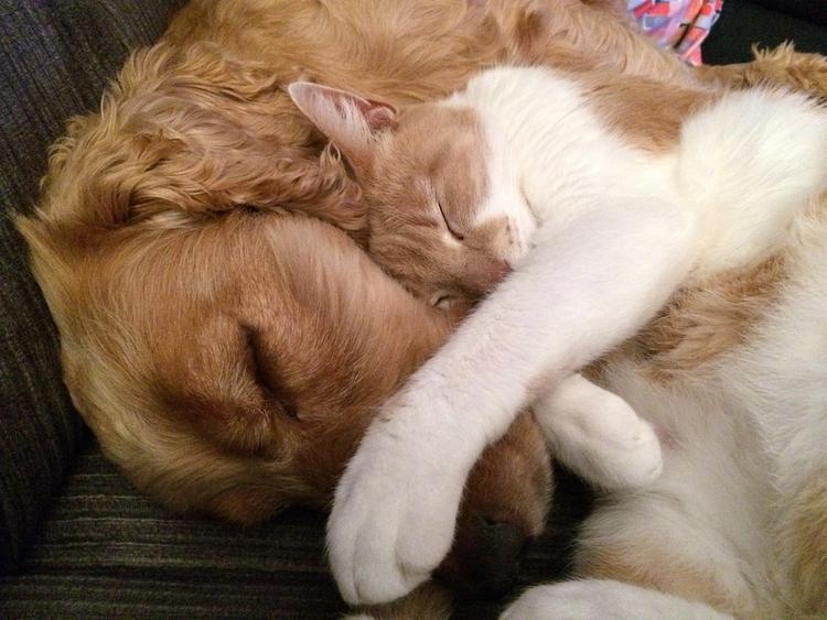 Жительница Екатеринбурга заморила голодом 18 кошек и собак