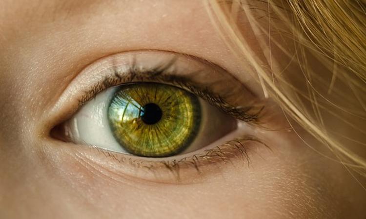 В Японии впервые пересадили стволовые клетки сетчатки глаза