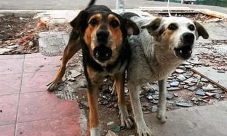 Жительницу Нижнего Новгорода съели собственные собаки