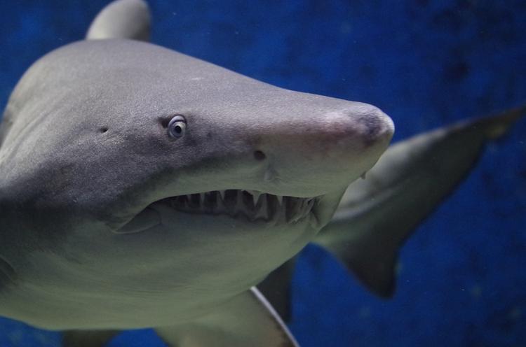 Австралийский рыбак напугал гигантскую акулу шваброй ВИДЕО