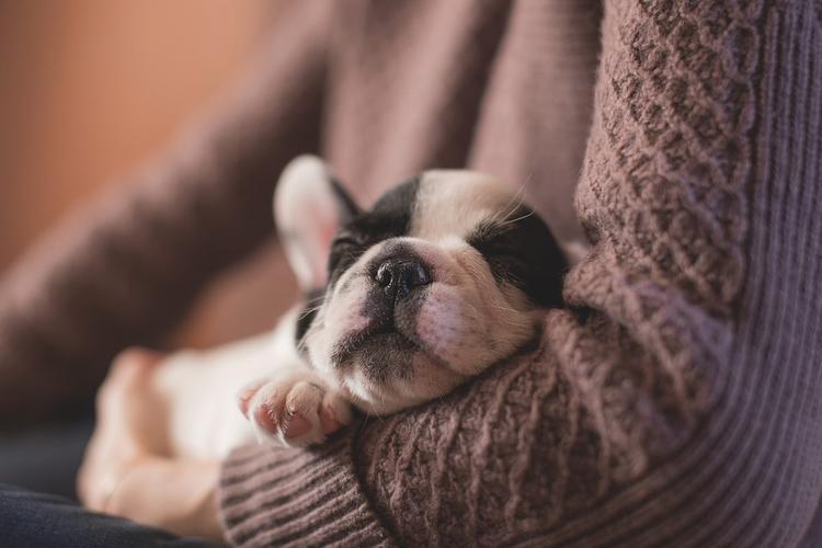 Ученые выяснили, что снится животным