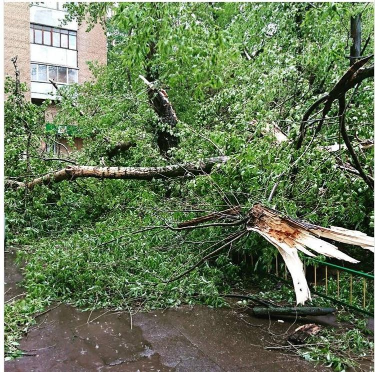 Во время урагана в Москве погибли два человека (ФОТО, ВИДЕО)