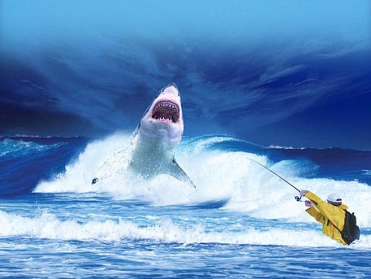 Голубая акула распугала отдыхающих на пляжах испанской Мальорки - ВИДЕО