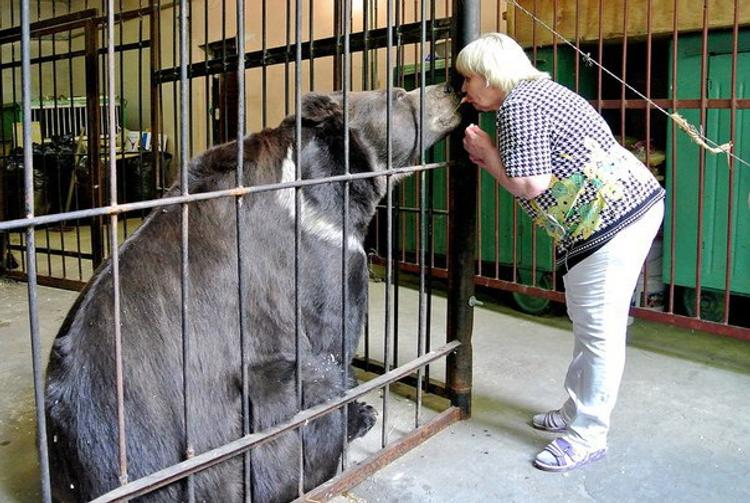Валя и Медведь. История дружбы и взаимопомощи дрессировщицы и бурого мишки