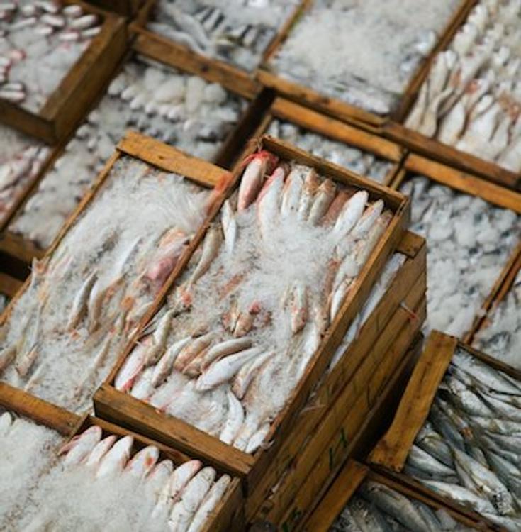Замороженную рыбу отделят ото льда