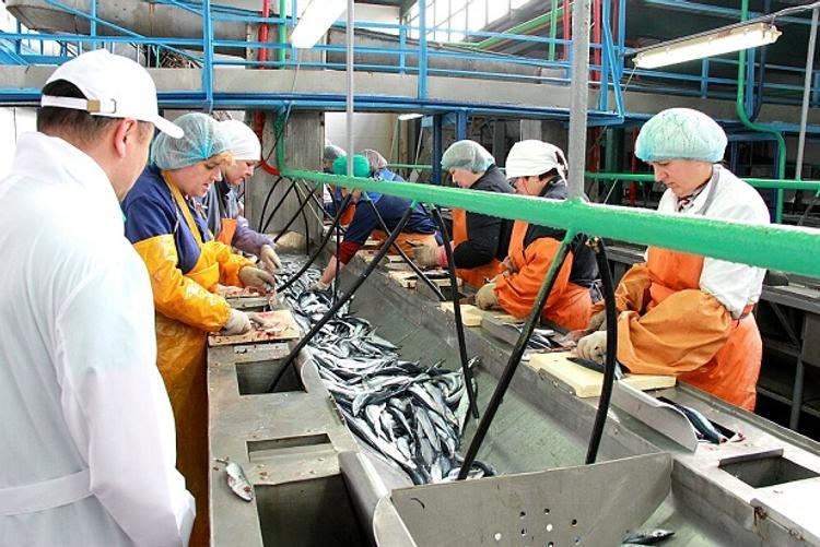 Два новых посёлка и рыбокомбинат появятся в Сахалинской области