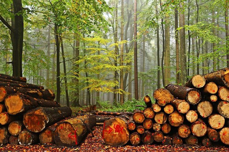 Путин требует следить за незаконной вырубкой лесов в ходе тушения пожаров