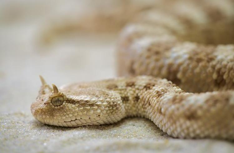 Спасатели обнаружили змею в подъезде жилого дома на  бульваре Яна Райниса