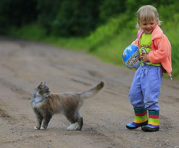 Ученые сравнили интеллект котов с IQ детей