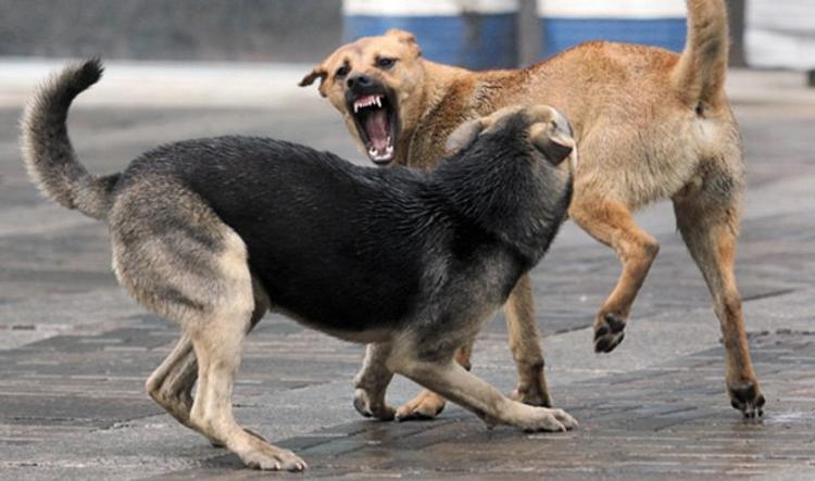 Отлов собаки в Свердловской области стоит 50 000