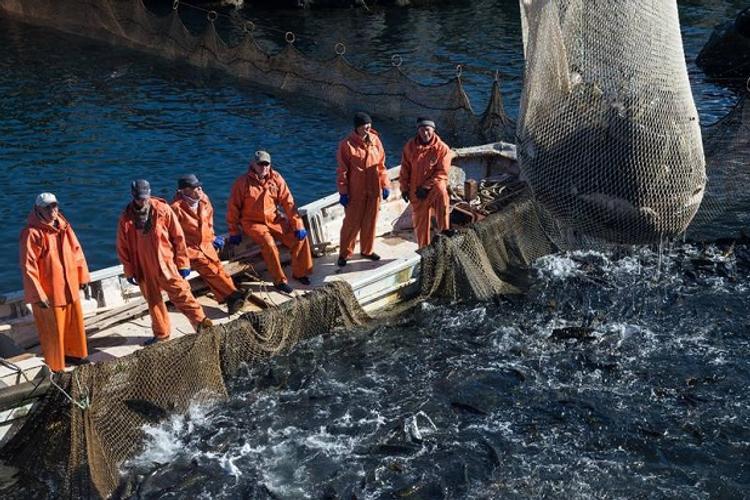 Власти намерены усилить меры по возрождению красной рыбы