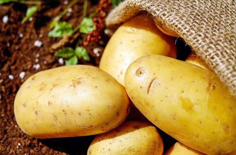На Среднем Урале убрано 40% урожая