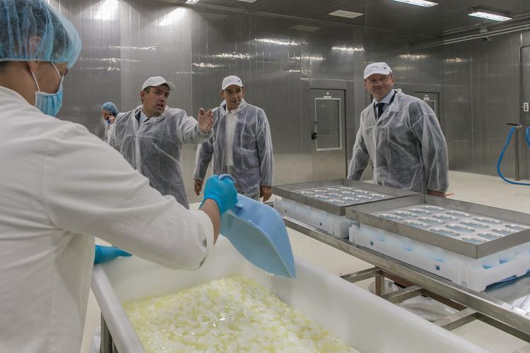 Под Екатеринбургом будут производить козий сыр с белой плесенью