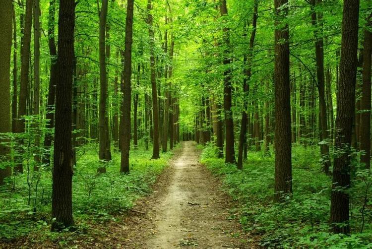 Лесная амнистия уничтожит 60% лесов вокруг мегаполисов