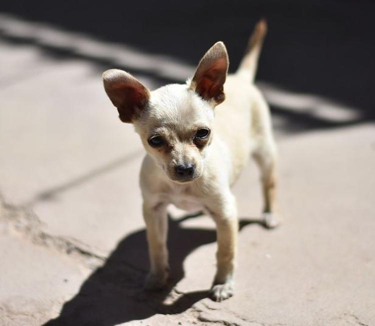 Гламурный фотограф ударила ногой больного малыша, защищая свою собачку (ВИДЕО)