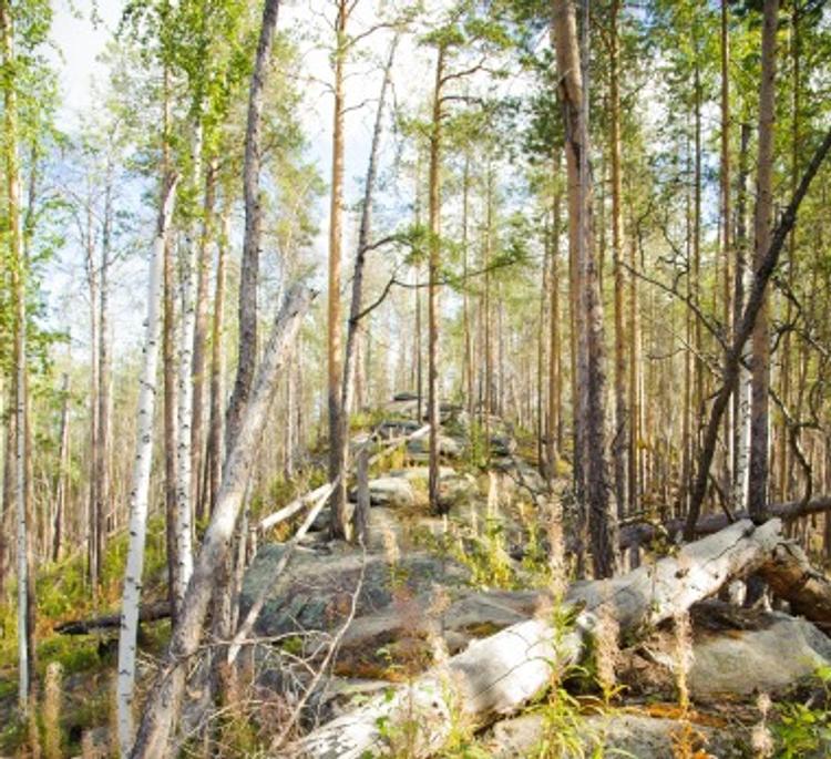 Житель Приамурья заблудился и прожил в тайге две недели