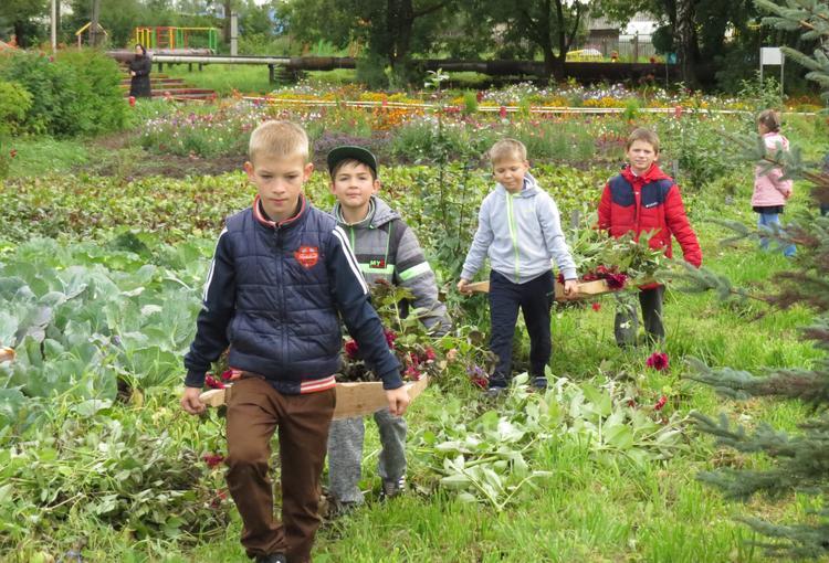 Юные садоводы Коршика вырастили «дымковскую клумбу»