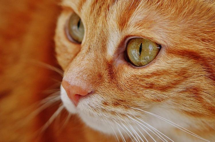 В Великобритании скончался самый пожилой кот на планете