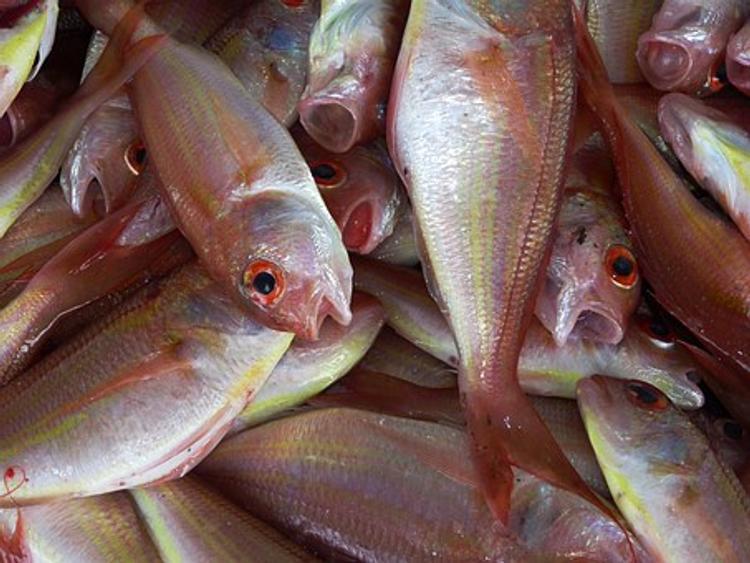 Рыба в России может подорожать