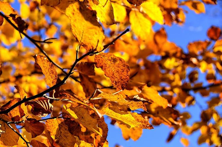 Самым теплым днем с начала октября признан понедельник
