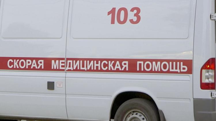Бродячие собаки напали на девятилетнего мальчика в Иваново