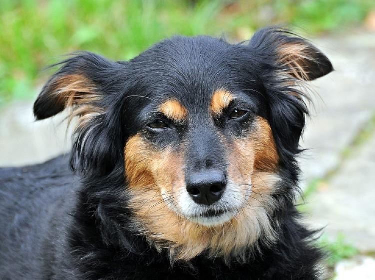 В Госдуму внесли закон об усилении наказания за жестокое обращение с животными