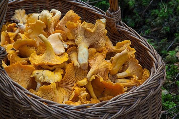 Врачи рассказали, кому и почему нельзя есть грибы