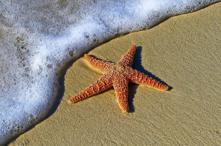 Тысячи мертвых морских звезд нашли сегодня на побережье Великобритании