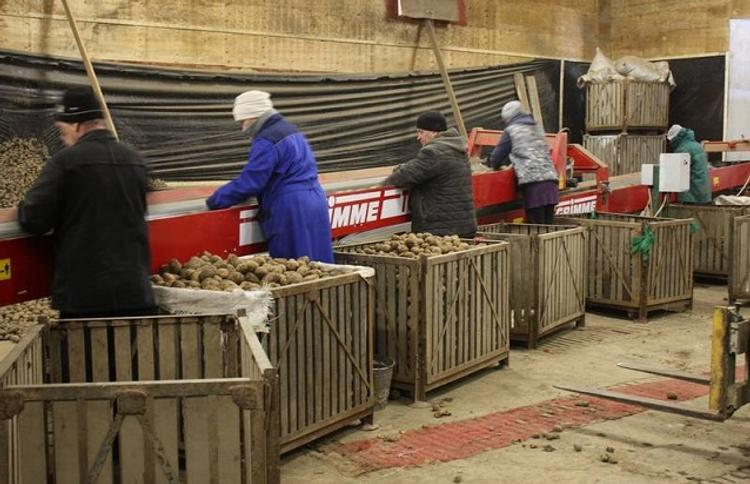 Сахалинским аграриям компенсируют затраты на семена